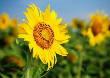 Proroga dell'autorizzazione di prodotti fitosanitari